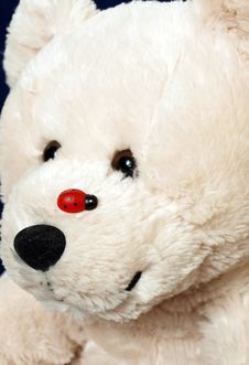 Free Bear Royalty Free Stock Image - 8360306