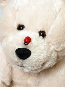 Free Teddy Bear Stock Image - 8360311
