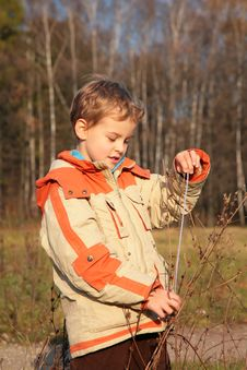 Free Boy In Autumn Wood Royalty Free Stock Image - 8360576