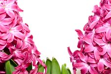 Free Hyacinth Stock Images - 8362734