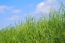 Free Green Grass And The Blue Spring Sky Stock Photo - 8364030