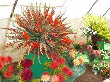 Free Rich Floral Dekoration Royalty Free Stock Photos - 8364098