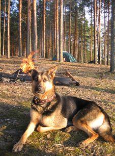 Free Dog Royalty Free Stock Photography - 8364277
