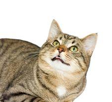 Free Cat, A Portrait Stock Photos - 8367413