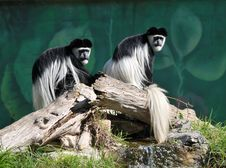Free Twins Stock Image - 8367541