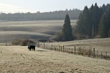 Free Farm Pasture - Early Morning Royalty Free Stock Images - 8368929
