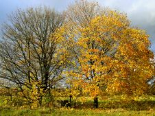 Free Autumn 3 Royalty Free Stock Image - 8369076