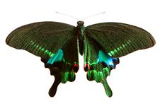 Free Butterfly Stock Photo - 8369350