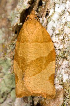 Free Small Moth Stock Photos - 8369373
