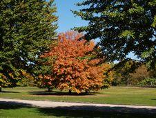 Free Fall Season Colors Stock Photography - 8369462