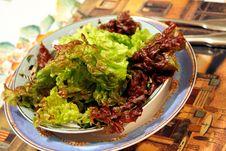 Free Fresh Organic Salad Stock Photos - 8369713