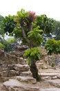 Free Solitary Tree Royalty Free Stock Photo - 8370455