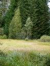 Free Bog In Wood. Stock Image - 8371971