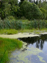 Free Bog In Wood. Royalty Free Stock Photo - 8372005