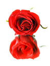 Free Red Rose And Its Reflection Royalty Free Stock Images - 8375209