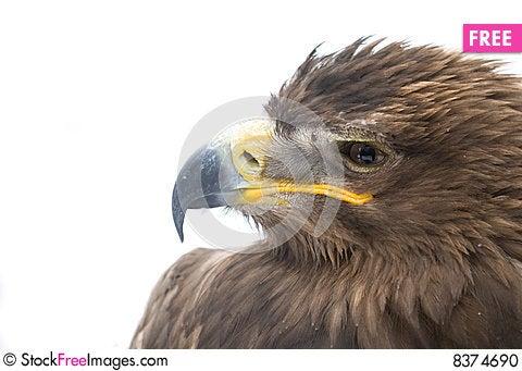 Free Eagle Head Stock Photo - 8374690