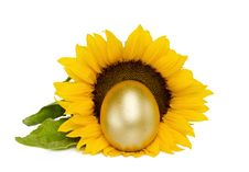 Golden Treasure Egg With Sunflower Over White Royalty Free Stock Image