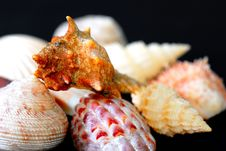 SeaShell Series 5 Stock Images