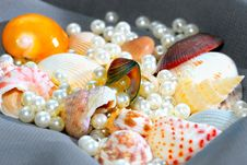 SeaShell Series 8 Royalty Free Stock Photography