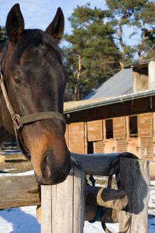 Horse Head With Stable In Background Royalty Free Stock Photos