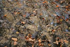 Free Footprints In The Mud Royalty Free Stock Photos - 8372418