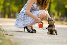 Free Woman With Tiny Terrier Royalty Free Stock Images - 8373629