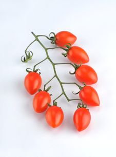 Free Small Tomatoes Stock Image - 8374201
