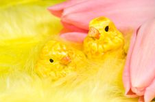 Free Chickens And Tulips Stock Images - 8374304
