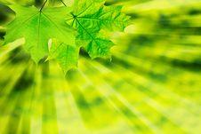 Free Green Leaf Stock Photo - 8374320