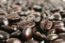 Free Coffe Bean Stock Photos - 8374333