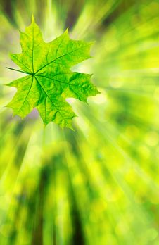 Free Green Leaf Royalty Free Stock Image - 8374396