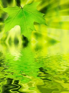 Free Green Leaf Royalty Free Stock Image - 8374466
