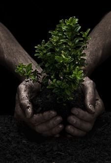 Free Tree In Hands Royalty Free Stock Photo - 8374595