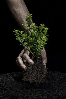 Free Holding A Tree Stock Photo - 8374600