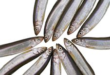 Free Fish Smelt 3 Royalty Free Stock Images - 8374879