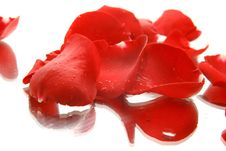 Free Red Rose Petals In Water Drops With Reflection Royalty Free Stock Photo - 8375785