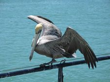 Free Pelican On A Wire Stock Photo - 8376100