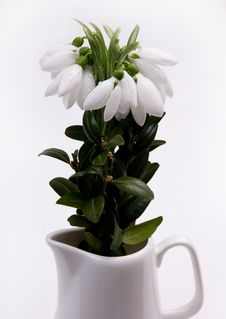 Free Snowdrops With Dew In A Jug Stock Photography - 8377492