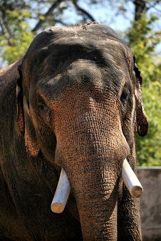Brown Elephant Royalty Free Stock Photos