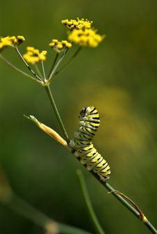 Free Caterpillar Lifts His Head Stock Photos - 8379613