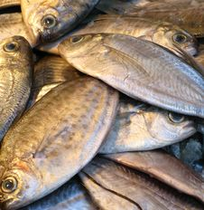 Free Fish At A Market Stall Royalty Free Stock Photography - 8379787