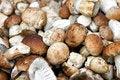Free Mushrooms Boletus Stock Photo - 8384760