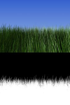 Free Grass Stock Images - 8381004