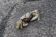 Free White Crab Stock Image - 8381481