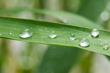 Free Rain Dops On Grass Royalty Free Stock Image - 8381826