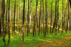 Free Morning In Autumn Forest Stock Photos - 8381983