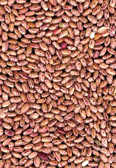 Free Beans Stock Images - 8383164