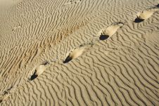 Free Footprints On The Sand Stock Photos - 8383513