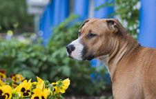 Free Dog And Flowers Stock Image - 8383811