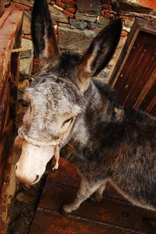 Free Donkey In The Mountain Village Of Cyprus Stock Images - 8384514